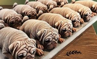 અહિં મળે છે કૂતરાના આકારની આઇસક્રીમ, ભાવ 250થી 400 રૂપિયા