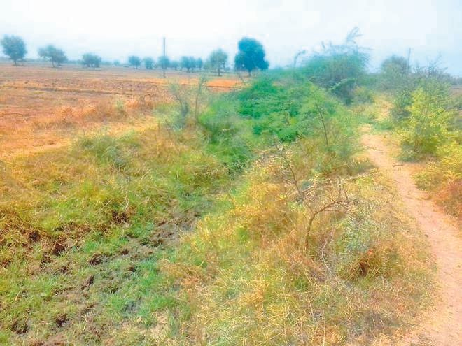 Make Rangpur-Bhanderaj canal with water supply to 800 acres