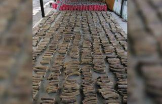 સિંગાપોરમાં 300 હાથીમાંથી લેવામાં આવેલા 8.8 ટનના હાથીદાંતનો જથ્થો પકડાયો
