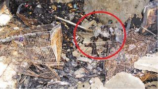 જગતપુર આગ: મિશ્રા પરિવારના 15 પોપટ, લવબર્ડ આગમાં જીવતાં ભૂંજાયા