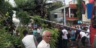 મણીનગરમાં રીક્ષા પર તોતિંગ ઝાડ પડતાં ડ્રાઈવરનું મોત, બેને ઈજા