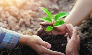 વીજ ચોરીના આરોપીને હાઈકોર્ટે એક મહિનામાં 50 વૃક્ષો રોપવાની સજા સંભળાવી