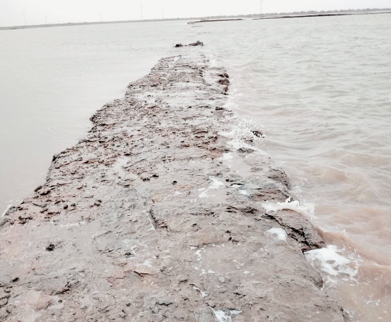 More than 5 lakhs loss to salt industry due to heavy rains in Morbi