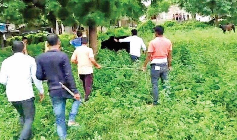 Bullfighting attacked on elderly women in Amirgarh's Big Karza village