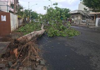 અમદાવાદ : કુબેરનગરમાં વૃક્ષ ધરાશાયી થતાં 2 લોકો ઈજાગ્રસ્ત
