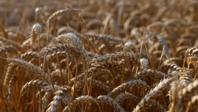Grain production is estimated at 14 million tonnes