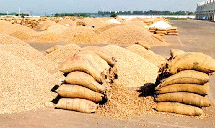 15 thousand disposed of 65 thousand sacks of groundnut in Rajkot yard