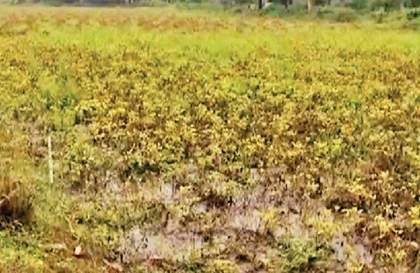 The Aravalli farmers had a chance to weep through natural disasters