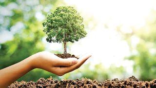 ક્ષમતાનું વૃક્ષ ઊગતું નથી, પણ ઉગાડવું પડે છે !