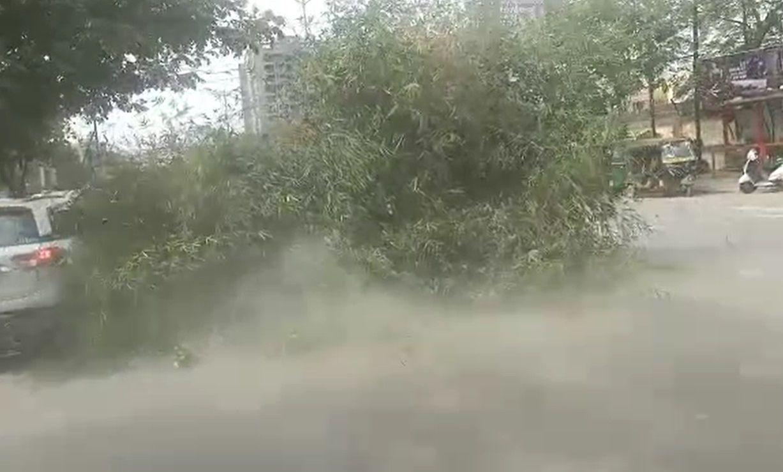 રોડ પર ગાડીમાં ઢસડી જવાતું ઝાડ