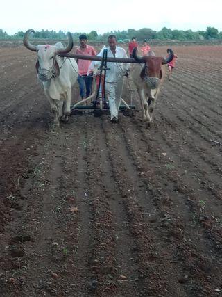 તાલાલા ગીર પંથકમાં વાવણી ઉપર વરસાદ થતાં ખેડૂતો ખુશખુશાલ