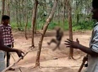 પશુ પર ક્રૂરતાઃ તેલંગાણામાં વાંદરાને ફાંસીએ લટકાવી દેવાયુ