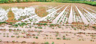 બનાસકાંઠા જિલ્લામાં ભારે વરસાદની આગાહી વચ્ચે ઠેરઠેર વરસાદી ઝાપટાં