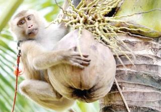 ચીને વાંદરાઓની નિકાસ બંધ કરતાં અમેરિકામાં રસી સંશોધનને અસર