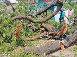સિદ્ધપુરમાં સસ્તા અનાજની દુકાન આગળ વૃક્ષ ધરાશાયી :  એકનું મોત, બે ઇજાગ્રસ્ત