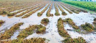 સૌરાષ્ટ્રમાં વરસાદ 'વેરી': રાજુલામાં ચાર ઈંચ