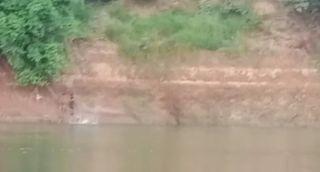 તીર્થધામ ચાંદોદ નજીક ઓરસંગ નદીમાં સ્નાન કરવા પડેલ આધેડને મગરએ ખેંચી લીધો
