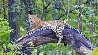 ગુજરાતના જામનગરમાં બનશે દુનિયાનું સૌથી મોટુ પ્રાણી સંગ્રહાલય