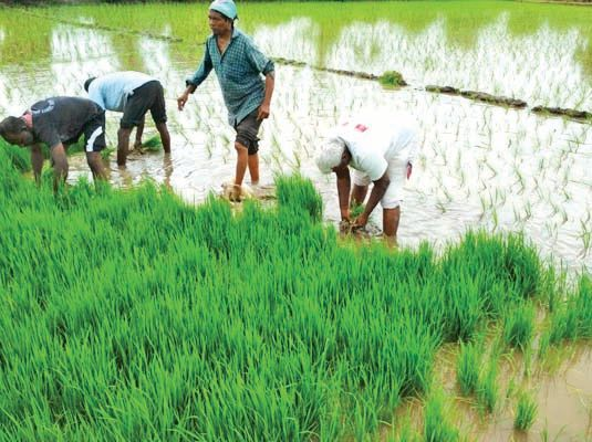 Agricultural Reform Act: A promise to benefit the world and double income