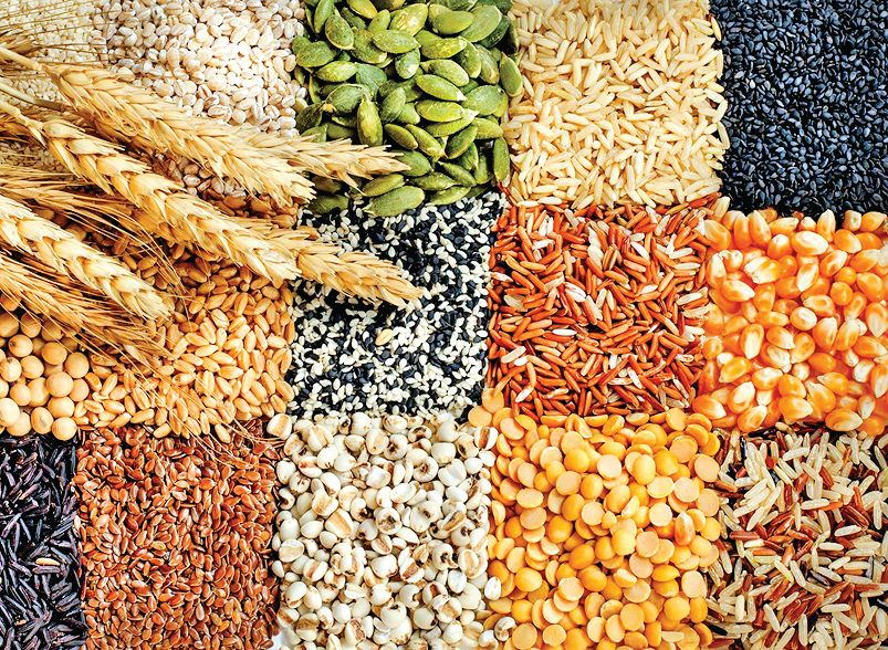 World grain prices rose for the seventh consecutive month
