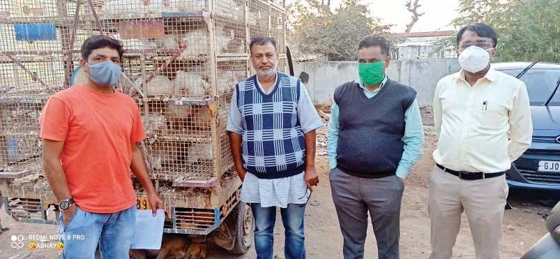 Instructions to the breeding centers to be vigilant by the animal husbandry team in the wake of bird flu