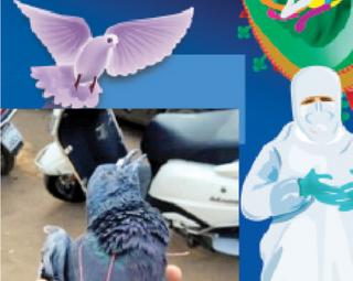 અજબ-ગજબ ગાઇડલાઇન! : ઉત્તરાયણમાં ફસાયેલા પક્ષી બચાવો પણ PPE કિટ પહેરી ઝાડ પર ચઢો