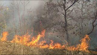 છોટાઉદેપુર જિલ્લાના નસવાડી તાલુકાના બિલગામ જંગલમાં આગ : વન્ય જીવોના જીવને જોખમ