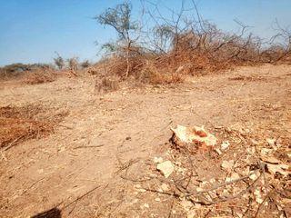 વડગામના પીલુચામાં સરકારી જમીન પરથી વૃક્ષ કપાતાં રોષ