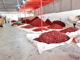 લાલ મરચાંનું પીઠું ગણાતા જોટાણા તાલુકામાં 20 ટકા ઉત્પાદન ઘટવા છતાં ભાવ વધ્યો નથી